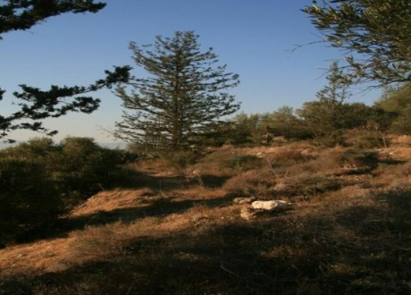 Residential Land  For Sale in Mitsero, Nicosia - L-65695