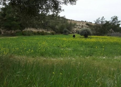 Agricultural Land For Sale in Anglisides, Larnaca - L-64436