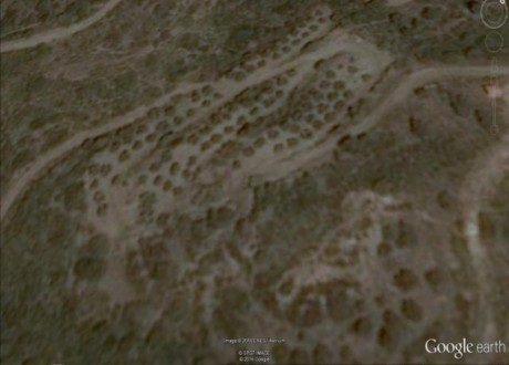 Agricultural Land For Sale in Lageia, Larnaca - L-66374