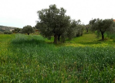 Agricultural Land For Sale in Anglisides, Larnaca - L-64438