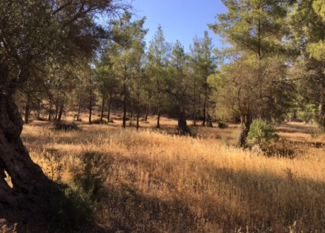 Agricultural Land For Sale in Kornos, Larnaca - L-70873