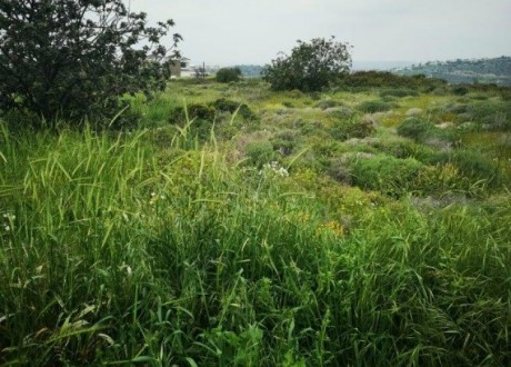 Residential Land  For Sale in Panthea, Limassol - P-99206