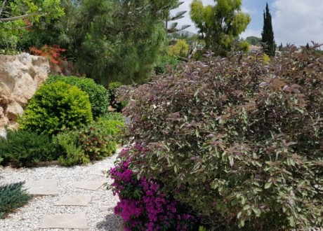 Bungalow For Sale in Tala, Paphos - H-100112