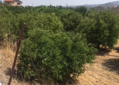 Agricultural Land For Sale in Eptagoneia, Limassol - L-101233