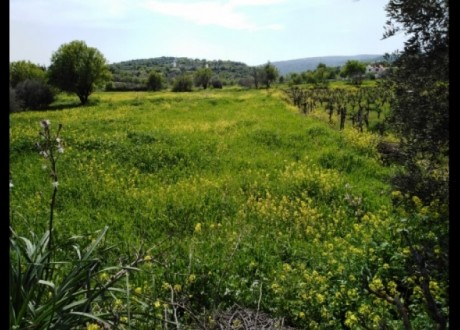 Residential Land  For Sale in Letymvou, Paphos - L-101776