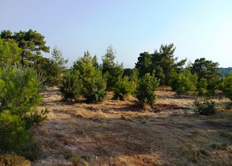 Residential Land  For Sale in Dora, Limassol - L-102399