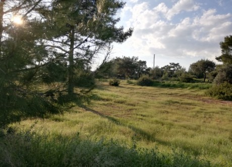 Residential Land  For Sale in Souni, Limassol - P-104392