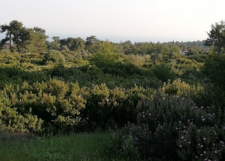 Residential Land  For Sale in Souni, Limassol - P-104394