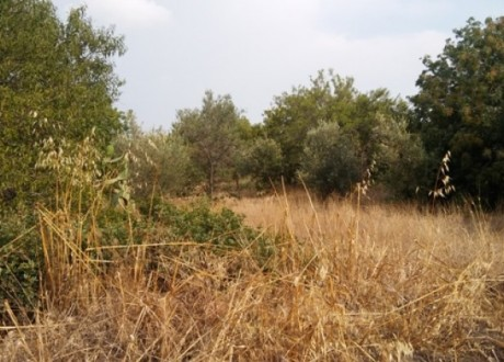 Residential Land  For Sale in Tala, Paphos - L-95797