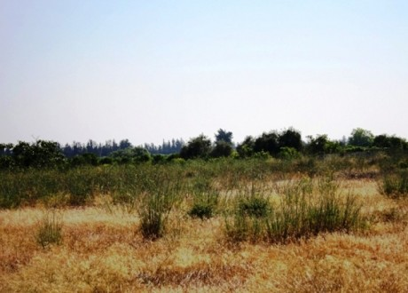 Residential Land  For Sale in Trachoni, Limassol - P-98313