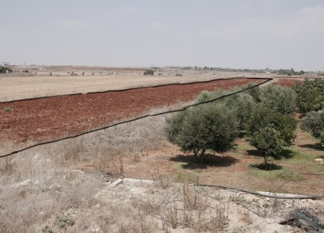 Agricultural Land For Sale in Liopetri, Famagusta - L-105913