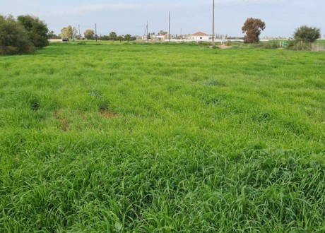 Residential Land  For Sale in Avgorou, Famagusta - L-108973
