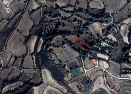 Agricultural Land For Sale in Polemi, Paphos - L-109697